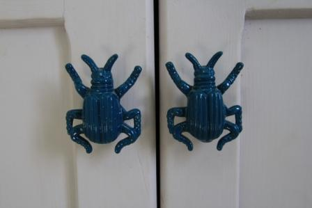 photo of beetle detail