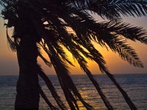 image of palmtrees at night