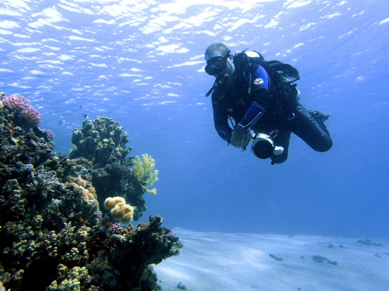 image of diver and coral