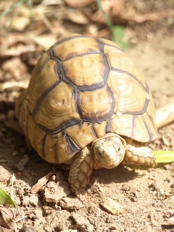 image of tortoise in garden