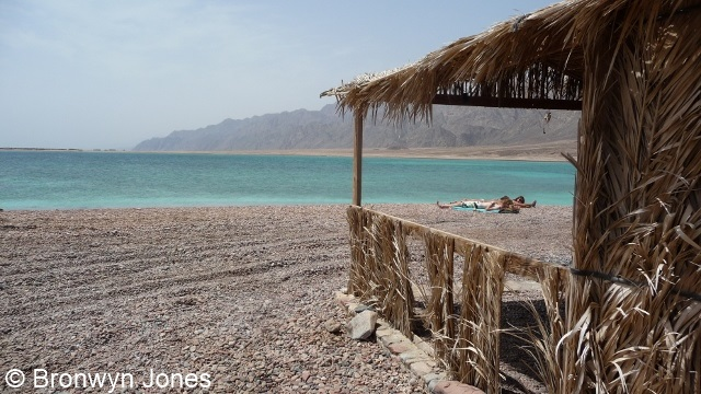 Image of beach at Ras Abu Galum
