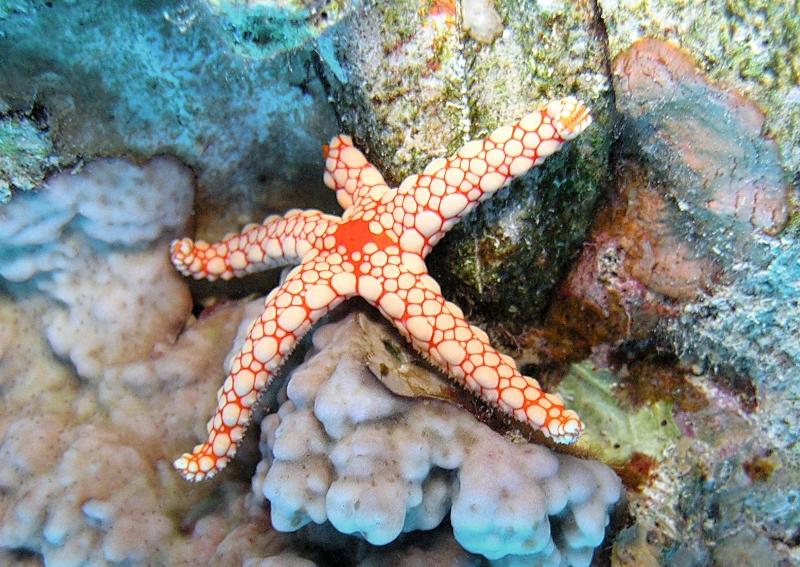 image of starfish
